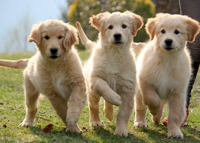 cuccioli_home