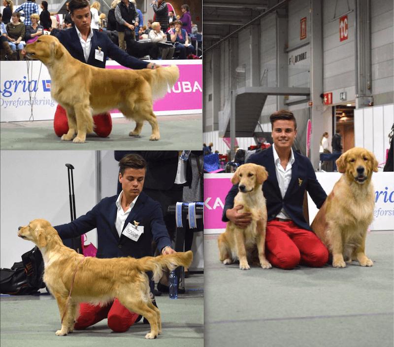 2015_09_06_European_Dog_Show_
