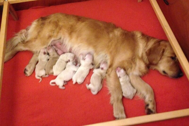 annuncio_nascita_cuccioli