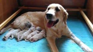 cuccioli tara e doc appena nati