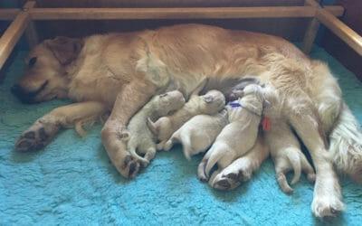 Sono nati i cuccioli di Chloe e Griffyn!