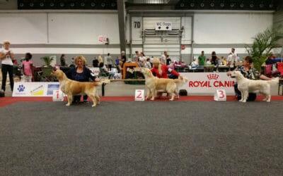 European Dog Show Bruxelles