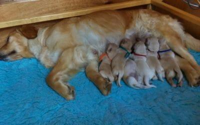 Sono nati i cuccioli di Maya e Mika!