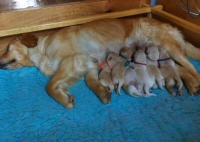 Cuccioli piccoli