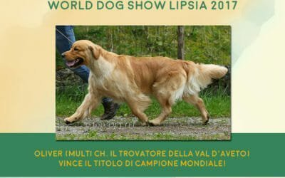 World Dog Show Lipsia 2017