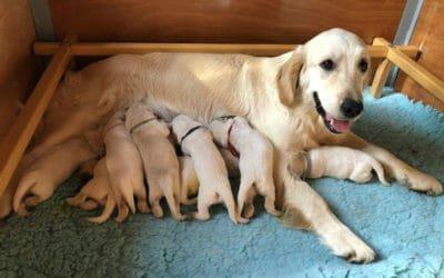 Sono nati i cuccioli di Nils e Josephine!
