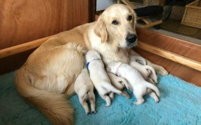 Sono nati i cuccioli di Mika e Cheryl