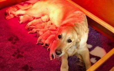 Nati i cuccioli di Jason e Sunny