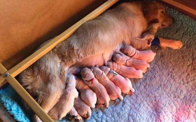 Sono nati i cuccioli di Agata e Reed