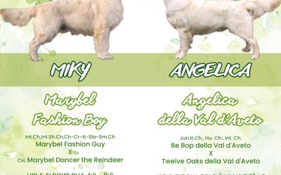 Aspettiamo i cuccioli di Miky ed Angelica!