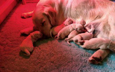 Sono nati i cuccioli di James e Bess!